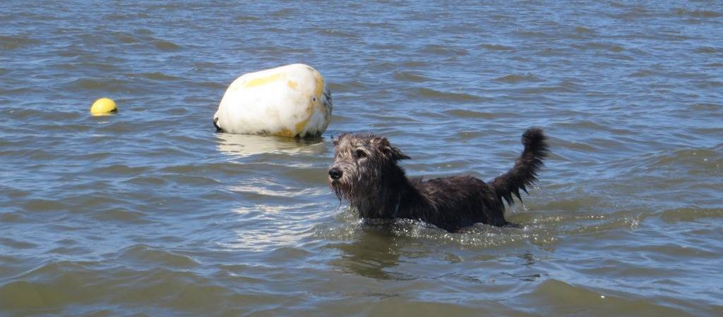 Irish Wolfhound Schiff in der Nordsee